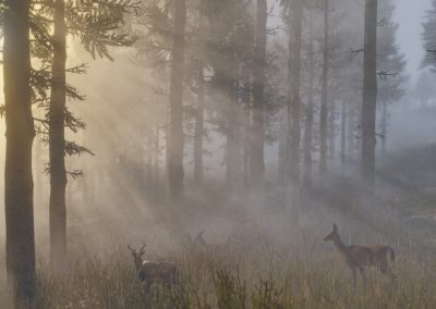 reddeadredemption2-screenshot29